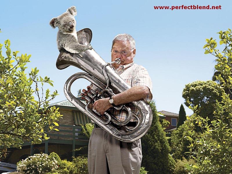 http://perfectblend.net/wallpaper/Harold%20wallpaper%20800x600.jpg